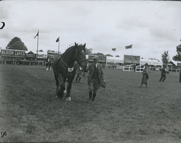 A horse at the Sussex County Show at Chichester june 1933