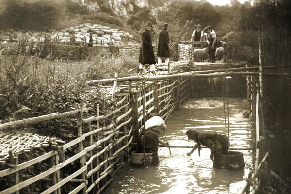 Sheep-washing in the River Arun, Peppering Farm, near Burpham, c1908. Two men (foreground) stand in barrels in the fenced-off washing area at the side of the River Arun as other workers prepare to put more sheep into the water (background)