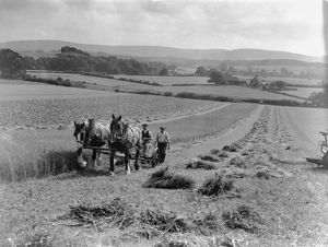 rural/linseed mowing strood west sussex august 1933
